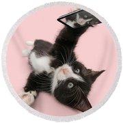 Cat Selfie Round Beach Towel