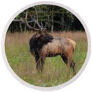 Round Beach Towel featuring the digital art Cataloochee Valley Elk  by Chris Flees