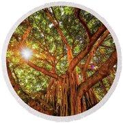 Catch A Sunbeam Under The Banyan Tree Round Beach Towel