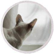 Cat In The Window Round Beach Towel