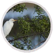 Cattle Egret In The Morning Light Round Beach Towel