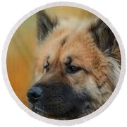 Caucasian Shepherd Dog Round Beach Towel