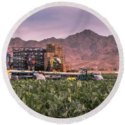 Cauliflower Harvest Round Beach Towel by Robert Bales