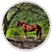 Cavalla Plains Horse - Cavallo Al Pian Della Cavalla Round Beach Towel