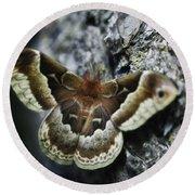 Cecropia Moth Round Beach Towel
