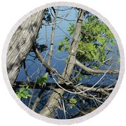 Cedar Leaning Out Over The Water Round Beach Towel