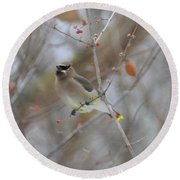 Cedar Wax Wing 2 Round Beach Towel