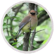 Cedar Wax Wing Round Beach Towel by Alison Gimpel