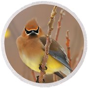 Cedar Wax Wing Round Beach Towel