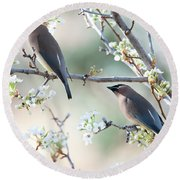 Cedar Wax Wing Pair Round Beach Towel by Jim Fillpot