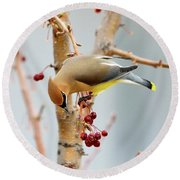 Cedar Waxwing 2 Round Beach Towel by Betty LaRue