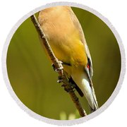 Cedar Waxwing Round Beach Towel by Adam Jewell
