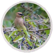 Cedar Waxwing And Berries Round Beach Towel by Karen Jorstad