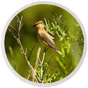 Cedar Waxwing At Glacier Round Beach Towel by Adam Jewell
