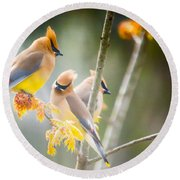 Round Beach Towel featuring the photograph Cedar Waxwing Beauty by Parker Cunningham