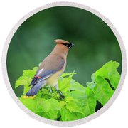 Round Beach Towel featuring the photograph Cedar Waxwing by Gary Hall