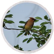 Cedar Waxwing Profile Round Beach Towel by Mark A Brown