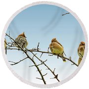 Cedar Waxwings Round Beach Towel by Geraldine Scull