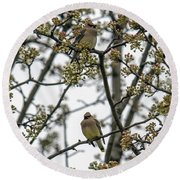 Cedar Waxwings In A Blossoming Tree Round Beach Towel
