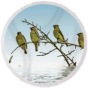 Cedar Waxwings On A Branch Round Beach Towel by Geraldine Scull