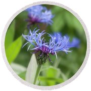 Centaurea Montana, Great Blue-bottle  Round Beach Towel