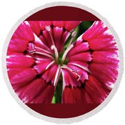 Center Of A Sweet William Round Beach Towel by Mary Ellen Frazee