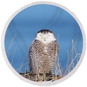 Centered Snowy Owl Round Beach Towel