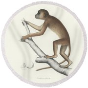 Central Yellow Baboon, Papio C. Cynocephalus Round Beach Towel