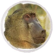 Chacma Baboon 6 Round Beach Towel