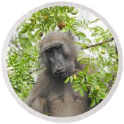 Chacma Baboon Round Beach Towel by Betty-Anne McDonald