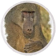 Chacma Baboon Round Beach Towel