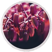 Round Beach Towel featuring the photograph Chandelier Plant Kalanchoe - A Solitary Morning by Sharon Mau