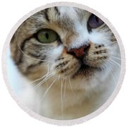 Round Beach Towel featuring the photograph Changing Colors by Munir Alawi