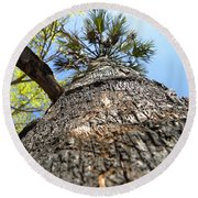 Round Beach Towel featuring the photograph Charred Palm Tree 000 by Chris Mercer