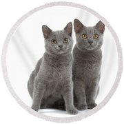 Chartreux Kittens Round Beach Towel
