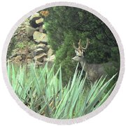 Round Beach Towel featuring the photograph Chasing Velvet Antlers 1 by Natalie Ortiz