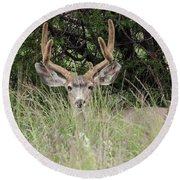 Round Beach Towel featuring the photograph Chasing Velvet Antlers 2 by Natalie Ortiz