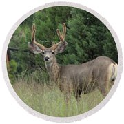 Round Beach Towel featuring the photograph Chasing Velvet Antlers 3 by Natalie Ortiz