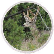 Round Beach Towel featuring the photograph Chasing Velvet Antlers 4 by Natalie Ortiz