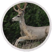 Round Beach Towel featuring the photograph Chasing Velvet Antlers 5 by Natalie Ortiz