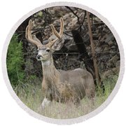 Round Beach Towel featuring the photograph Chasing Velvet Antlers 6 by Natalie Ortiz