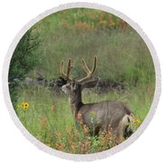 Round Beach Towel featuring the photograph Chasing Velvet Antlers 7 by Natalie Ortiz