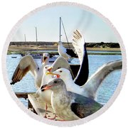 Chatty Seagull Birds Round Beach Towel