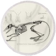 Checkered Elephant Shrew Skeleton Round Beach Towel