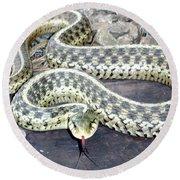 Checkered Garter Snake Round Beach Towel