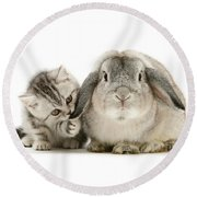 Checking For Grey Hares Round Beach Towel