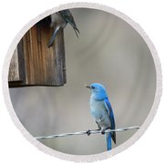 Checking The Nest Round Beach Towel by Mike Dawson