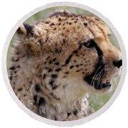 Cheetah No. 2  Round Beach Towel