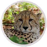Cheetah No. 5 Round Beach Towel