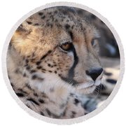 Cheetah And Friends Round Beach Towel